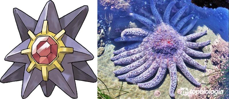 Starmie-estrela-do-mar-girassol