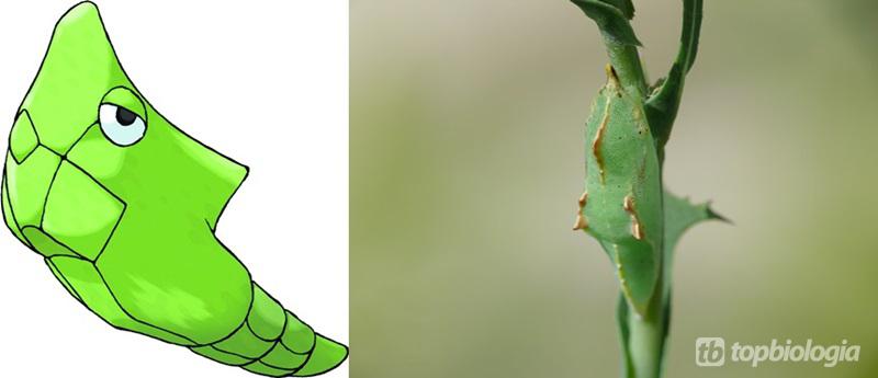 metapod-pieris-rapae-puppa